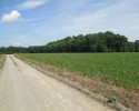 Restorable Antebellum Home with Grass Air Strip-191+ Acres in Hanover County