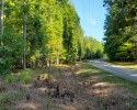 Wooded Building Lot! 16.78 Acres in Amelia County