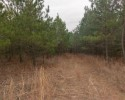 Timberland Tract for Sale! 150+ Acres in Fluvanna