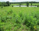 For Sale! 151+ Acres in Fluvanna with Pond!