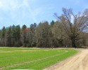 Cropland/Timberland Tract! 218.68 Acres in Richmond County